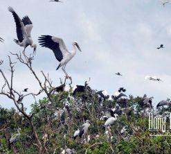 Những Cánh Chim An Nhiên