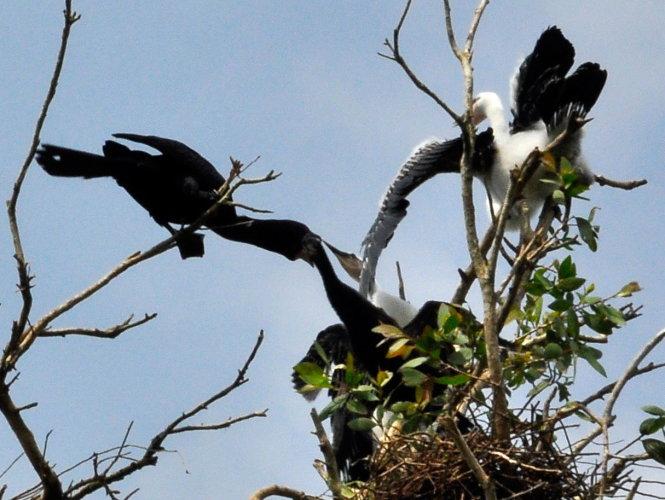Đắm mình trong thế giới chim muông hoang dã Tam Nông