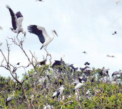 Rợp trời chim